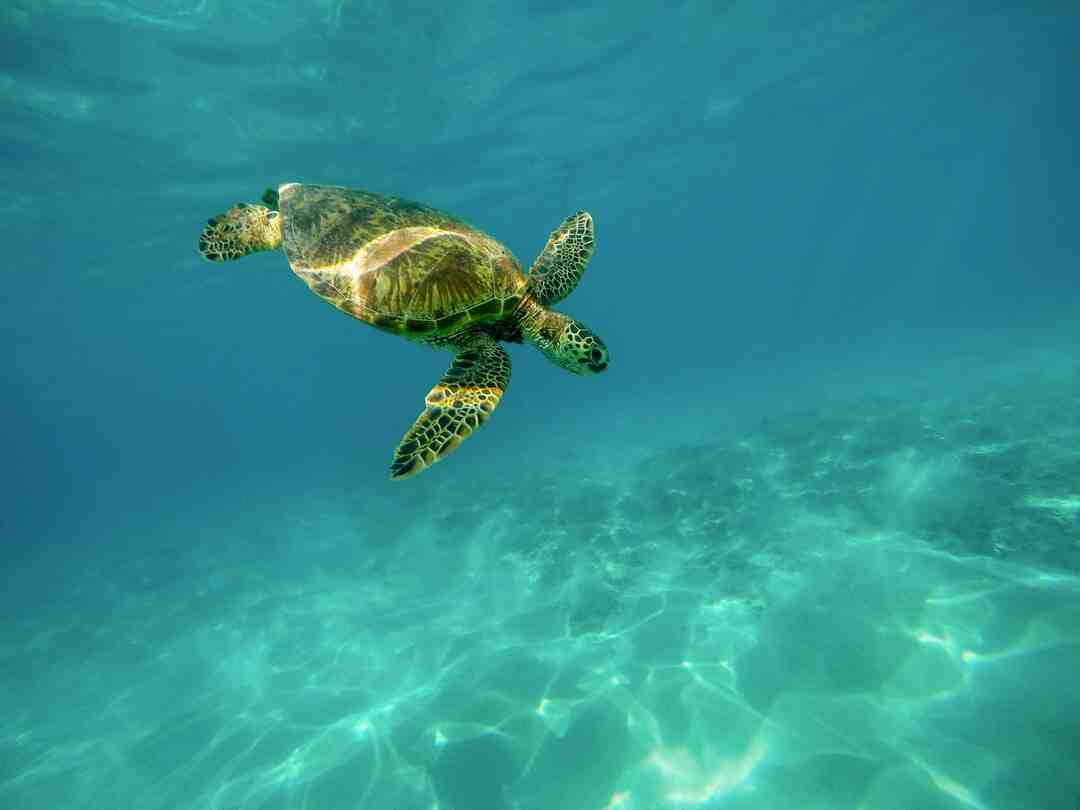 How to travel galapagos islands