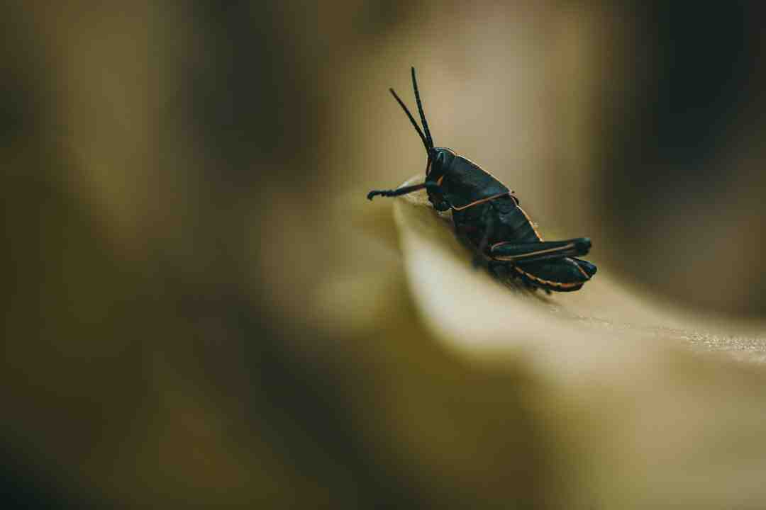 How to stop bugs from coming up the drain