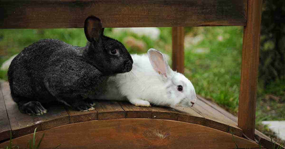 Will a 2 foot fence keep rabbits out?